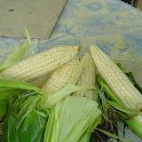 Corn from the garden.