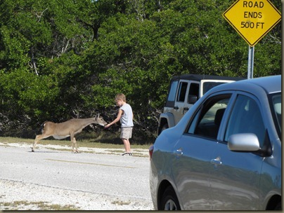 boy illegally feeding key deer