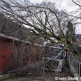 Opruimen van omgewaaide boom Aldi - Foto's Freddy Stotefalk