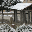 2013-sotosalbos-nieve09.jpg