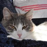 2012-7 gatti