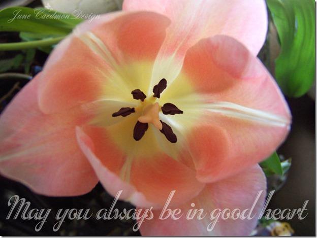 Tulips_GoodHeart
