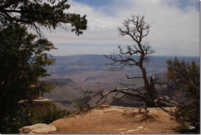 05-17-13 B Grand Canyon North Rim Drive (130)