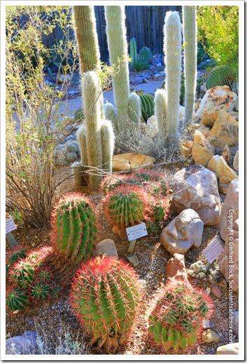 131203_TucsonBotanicalGarden_090