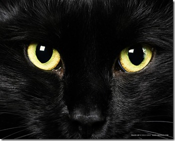Black-Cat-Yellow-Eye-Wallpaper