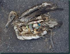 dead bird plastics