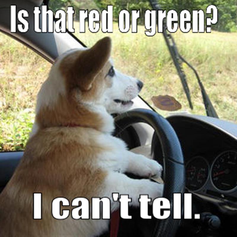 Jika Anjing Mengendarai Mobil