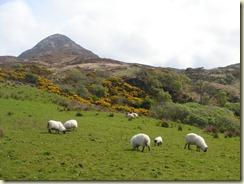 01.Parque Nacional de Connemara