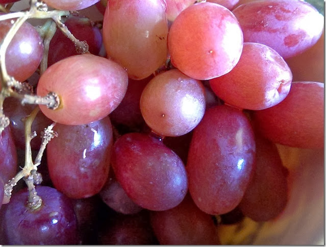 grapes-public-domain-pictures-1 (2306)