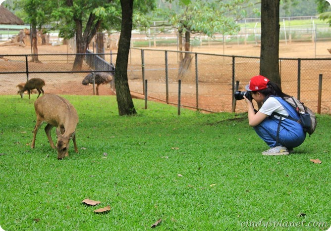 Chok Chai Farm Petting Zoo (6)