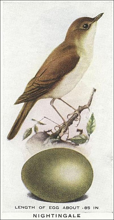 birdegg