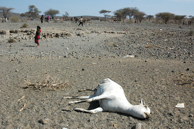 A sheep, overcome by heat and drought, lies dead in the Oromiya Region of Ethiopia, 2011. Andrew Heavens / sahelblog.wordpress.com