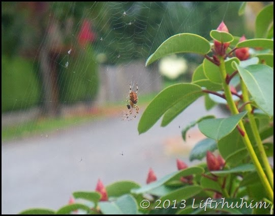 Spider spinning web!