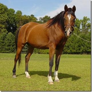 أجمل الأحصنة