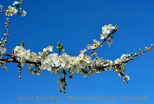 Glória Ishizaka - Primavera 2013 - 30