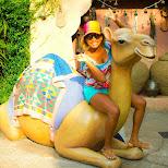 amber riding the camel at Tokyo DisneySea in Urayasu, Tiba (Chiba) , Japan