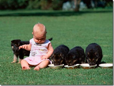 baby-and-puppies