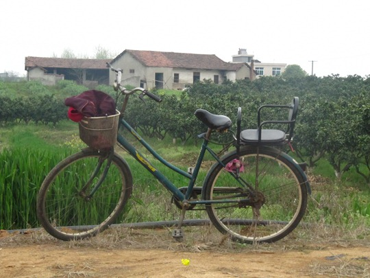 A Chinese farm worker's bicycle parked in the fields