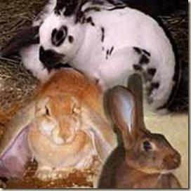 conejos ateismo