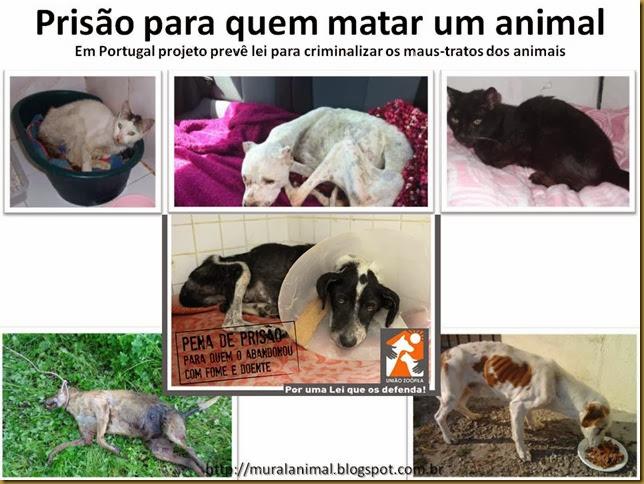 Prisão para quem matar um animal