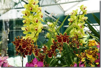 Festival de Orquídeas em Teresópolis 12