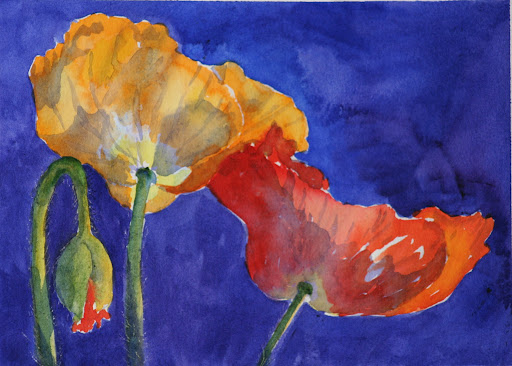 Iceland Poppies - watercolor