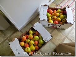 apple fritters - The Backyard Farmwife