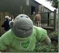 Paignton zoo 22