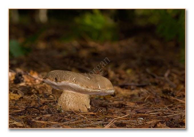 Fungi 9  Bit Bol