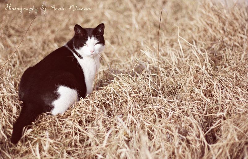 hugo i gräset1