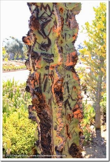 150324_SanDiego_BalboaPark_DesertGarden_008