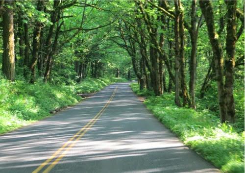 DrivingHistoricColumbiaRiverHwy--2014-05-7-22-11.jpg