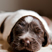 Puppies_Tria-01420.jpg