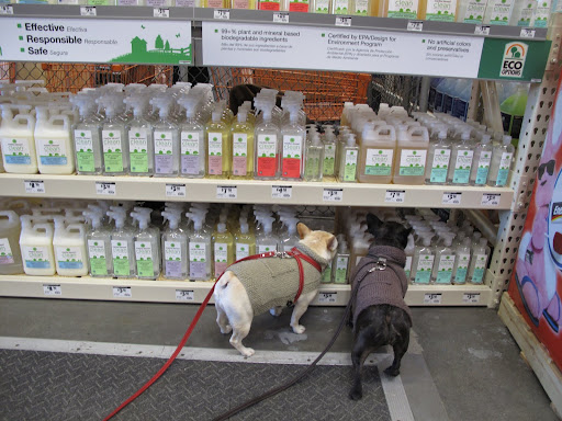 MS Clean products are safe for every family member.  Sharkey and Francesca are checking out the display and approve.