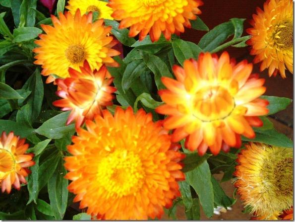flores de setiembre2 015[2]