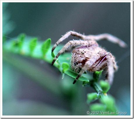 Spider_Grey_11112_IMG_0569