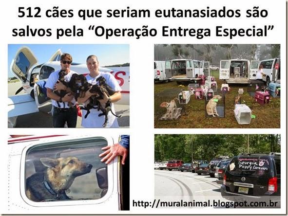 512 cães que seriam eutanasiados são salvos pela
