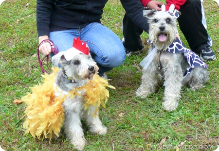 Diy newlyweds diy home decorating ideas projects october 2011 diy dog halloween costumes solutioingenieria Images