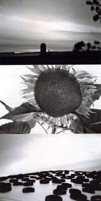 totem series totem41 flower larrycwik