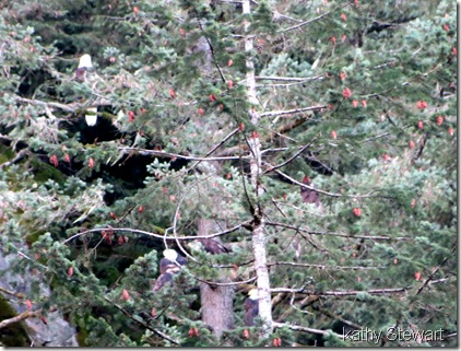 Hiding Eagles