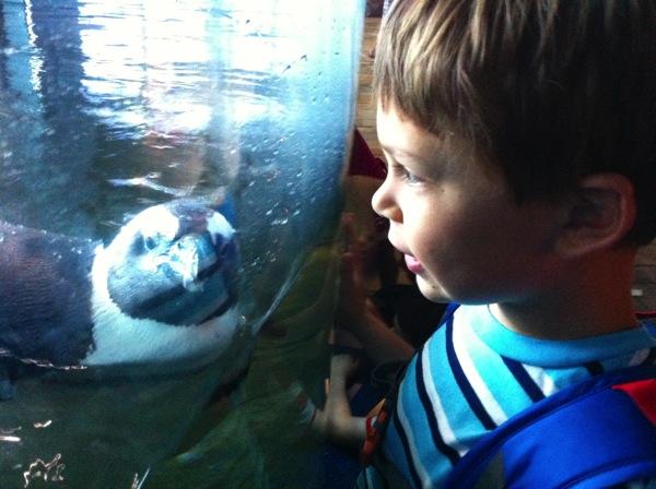 Monterey Aquarium penguin