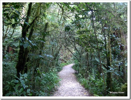The pathway through the Kahurangi National Park to the Riwaka Resurgence.