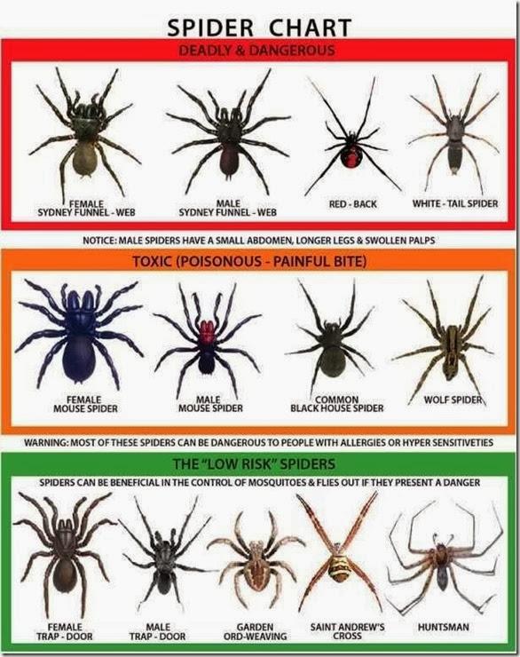 australia-scary-spiders-023