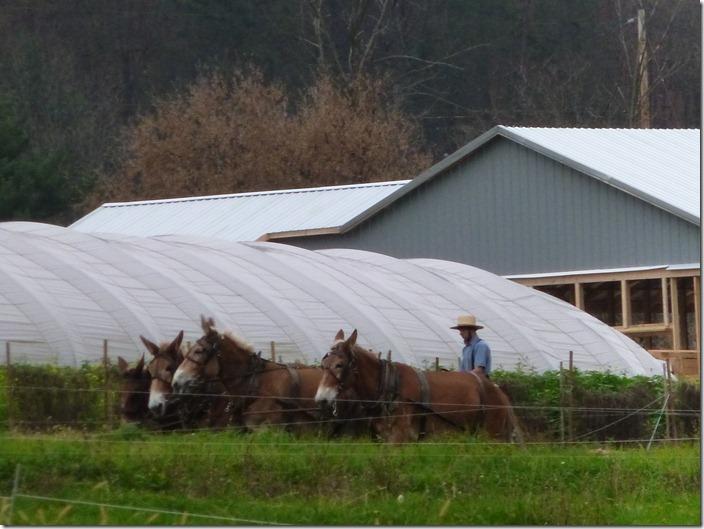 Amish team