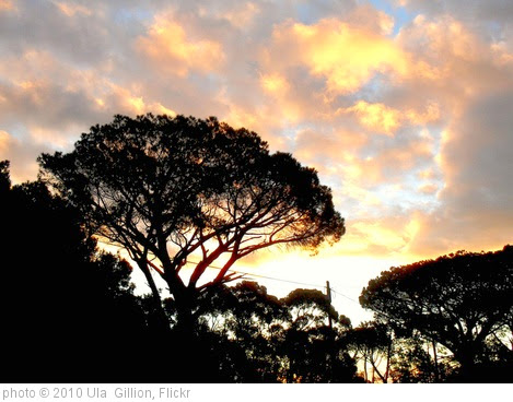 'Sunset behind pine trees' photo (c) 2010, Ula  Gillion - license: https://creativecommons.org/licenses/by/2.0/