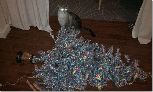 Gatos odeiam o natal (7)