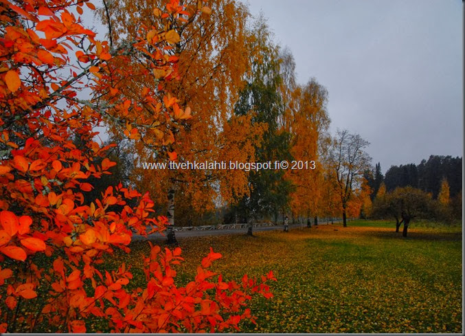 viimeisimpiä ruskan puoli kuvia 035