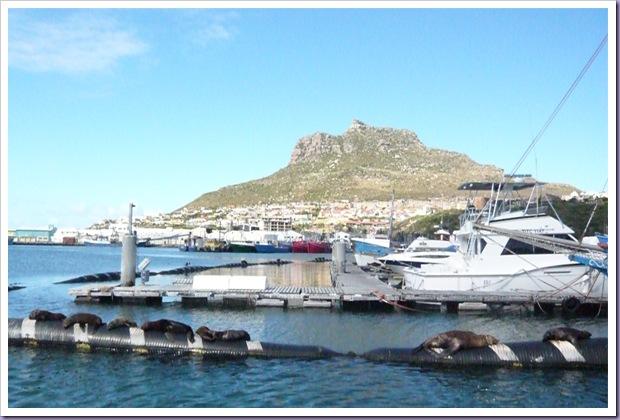 Cape-Town-África-do-Sul-Ilha-das-Focas-1