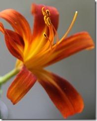 2011.8 indoor flowers-6