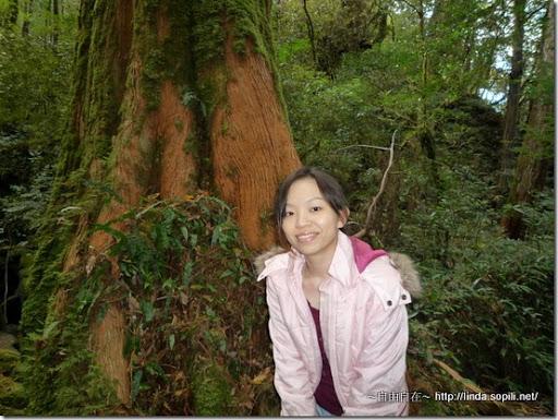 司馬庫斯-day2-巨木合照